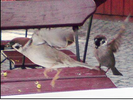 bird-action